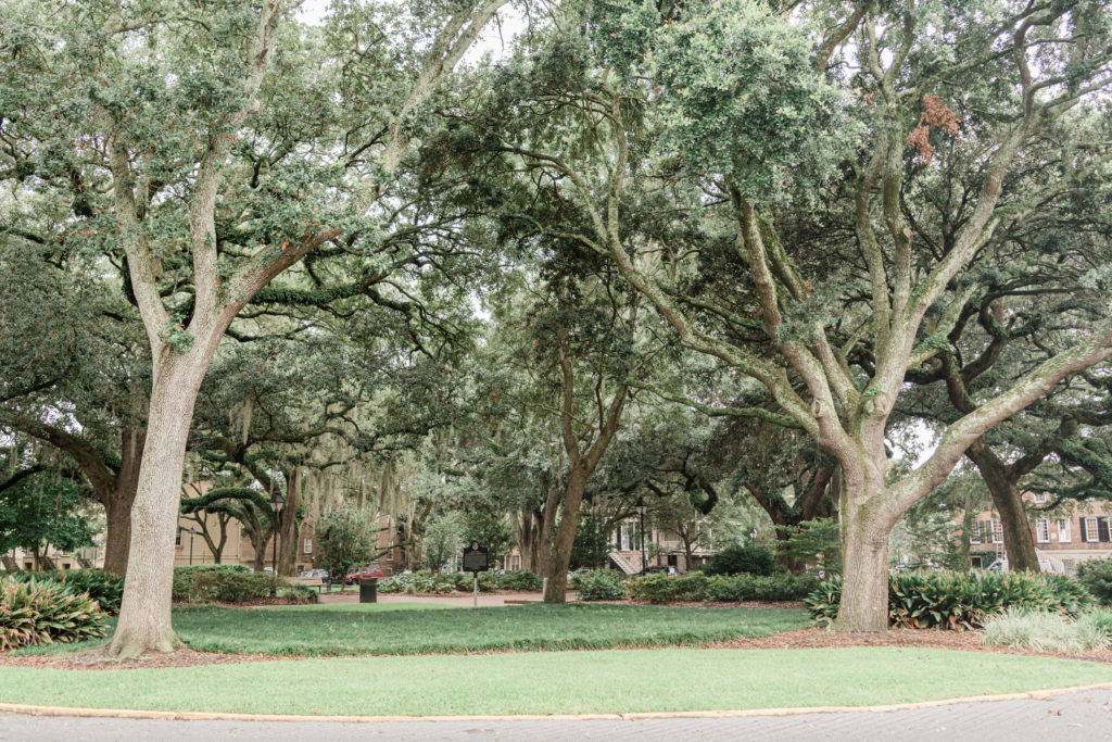 savannah georgia three day itinerary flytographer with Spanish moss trees in a city square